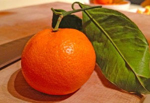 satsuma photo